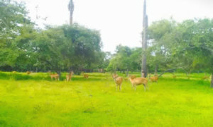 baluran national park 2